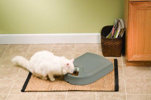 petsafe futterautomat für katzen