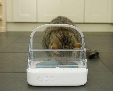 Katze daran gewöhnen aus Futterautomat zu fressen