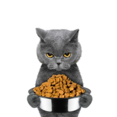 Und? Schmeckt es mal wieder nicht? Katzen sind kritisch was das Futter angeht. Versuchen Sie es mal mit hochwertigem Biofutter mit hohem Anteil an Fleisch und ohne Zusatz von Getreide oder andere billige Bestandteile - Foto: Bilevich Olga/Bigstock