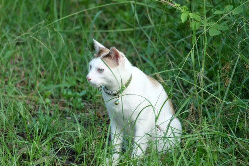 Katze in der freien Natur hat genügend Gräser zur Verfügung