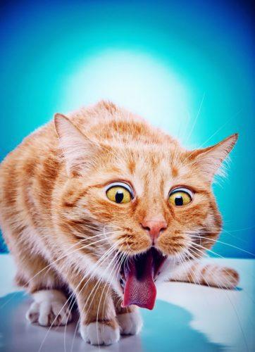 Wenn die Katze das Futter verweigert