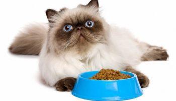 10 Wege damit mäkelige Katzen wieder fressen