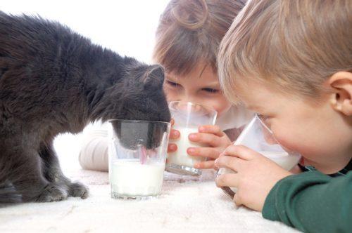 Ist Katzenmilch gut für Katzen?