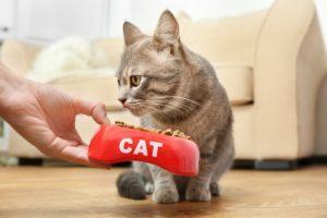 Katze füttern - Mit Automat