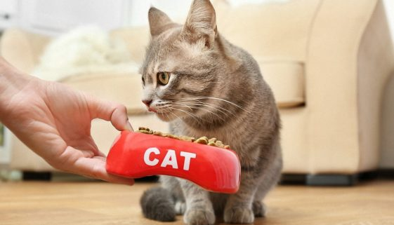 bigstock-Woman-hand-feeding-cat-at-home-1599113451
