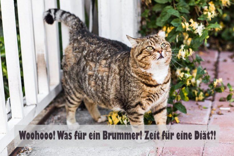 Katze mit Übergewicht