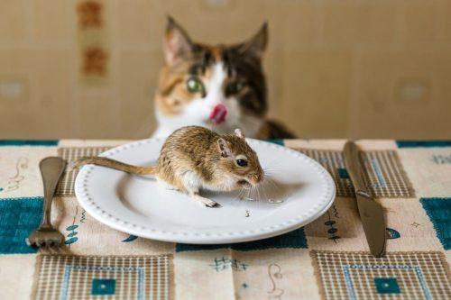 Fütterung von Frischfleisch bedeutet eine Artgerechte Ernährung der Katze