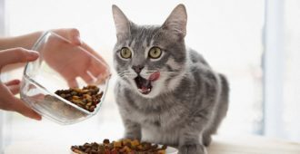 bigstock-Owner-feeding-cute-cat-at-home-1774773191