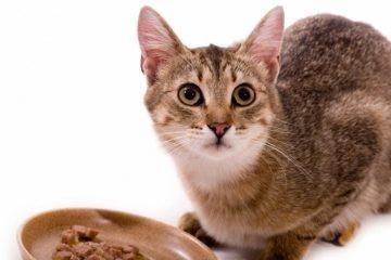 Hypoallergenes Katzenfutter – wenn der Stubentiger nicht mehr alles verträgt