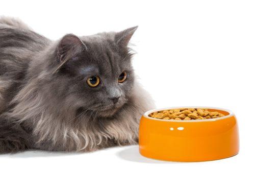 Allergiefreies Katzenfutter