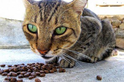 katzenfutter-trockenfutter1
