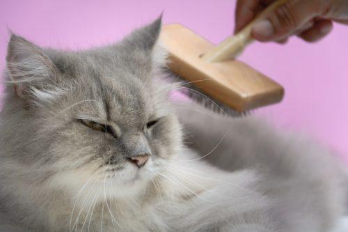Katzenfell pflegen - Vorbeugung gegen verschluckte Katzenhaare