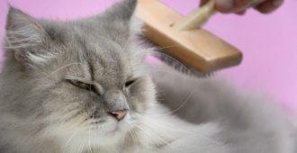 bigstock-Brush-The-Cat-Fur-Comb-On-A-Wo-2074633991