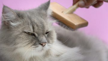 bigstock-Brush-The-Cat-Fur-Comb-On-A-Wo-2074633991