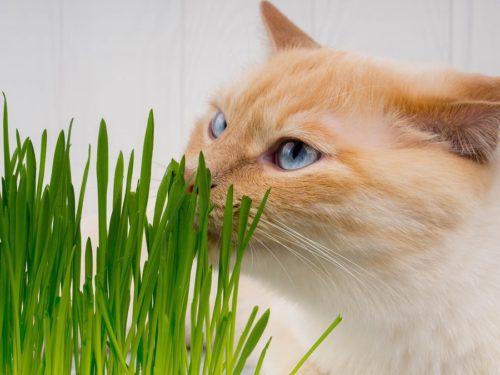 Katzengras hilft bei der Verdauung