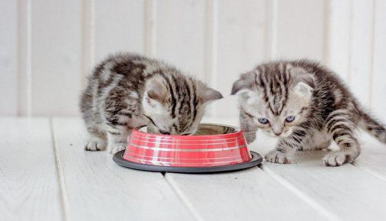 katzenfutter-fuer-kitten1