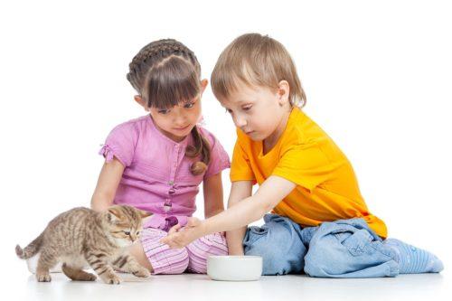 Kittenfutter für Katzenwelpen