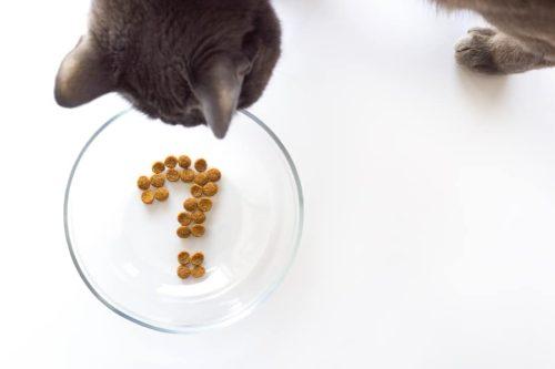 Katzen richtig füttern: Tipps für die Katzenfütterung