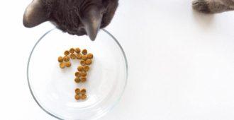 richtige-katzenernaehrung1