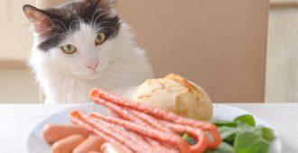 giftige-lebensmittel-katzen1