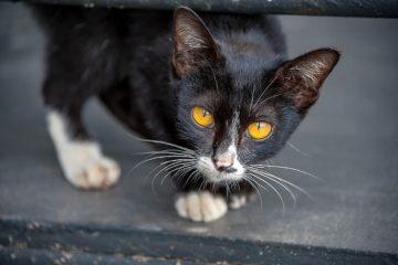 Untergewicht bei der Katze – Ab wann sind Katzen untergewichtig?