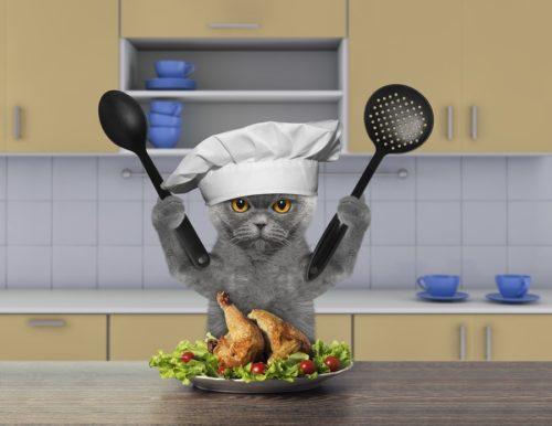 Frisch zubereitetes Katzenfutter