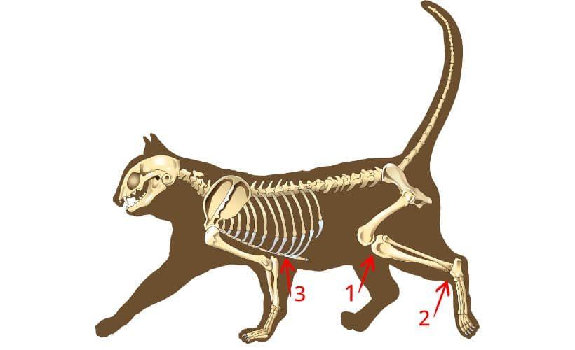 Katze FBMI messen