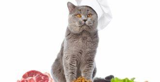 Selbstgemachtes Katzenfutter
