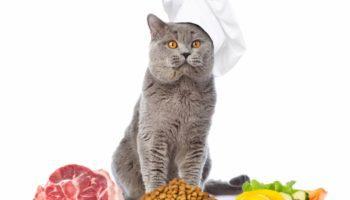 Katzenfutter selber machen – Kochen für die Katze