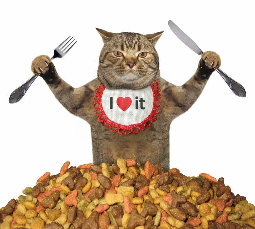 Hochwertiges Katzenfutter erkennen