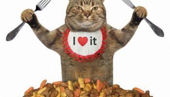 Ratgeber gutes Katzenfutter richtig erkennen