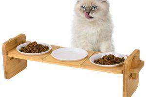 Die Petacc Futterbar - Perfekter Platz zur Fütterung Ihrer Katze