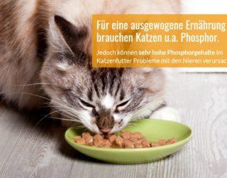 Phosphorgehalt im Katzenfutterr