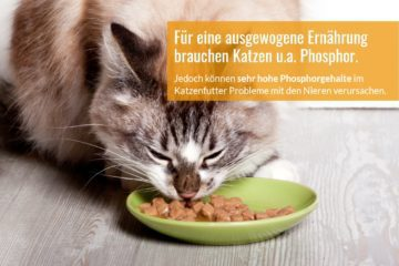 Warum Sie auf den Phosphorgehalt im Katzenfutter achten sollten
