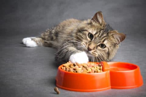 Zu hoher Phosphorgehalt im Katzenfutter schädigt