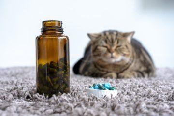 Vitamine und Nahrungsergänzungen für Katzen – Sinnvoll?