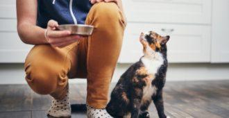 Katze verweigert Futter? Was tun?