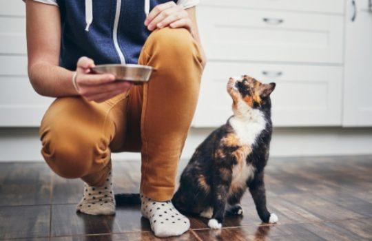 Appetitanreger für Katzen