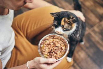 Wie oft muss ich meine Katze füttern?