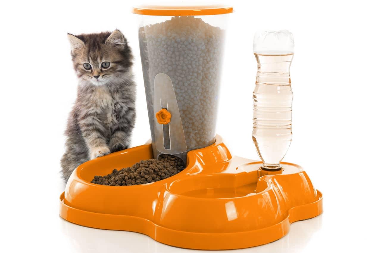 Futterautomat für Katzen zur automatisierten Fütterung