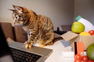 Katzenfutter im Amazon Spar-Abo kaufen – Lohnt sich das?