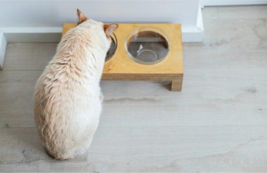 Esstisch für Katzen – Schöne Futterstationen für die Katze