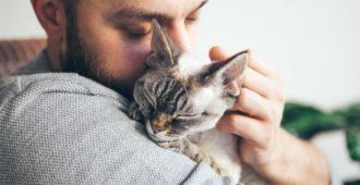 Probiotika Katze