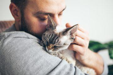 Probiotische Nahrungsergänzungsmittel für die Katze