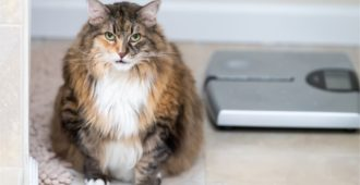 Katze mit Übergewicht?