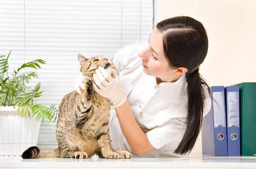 Zahnuntersuchung Tierarzt