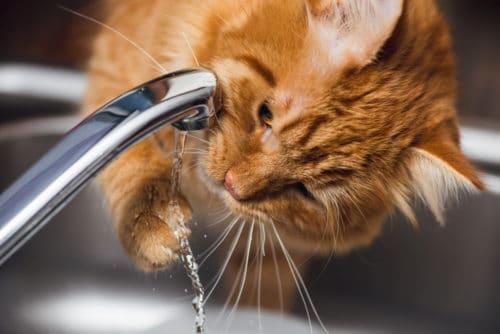 Katze trinkt am Wasserhahn