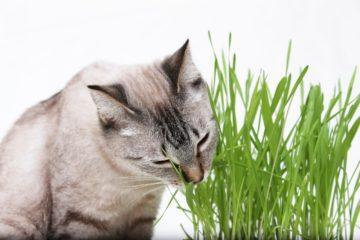 Warum frisst meine Katze Gras?