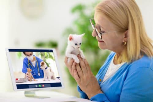 Online Beratung vom Tierarzt per Videochat